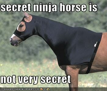ninja and horse are two newTLDs