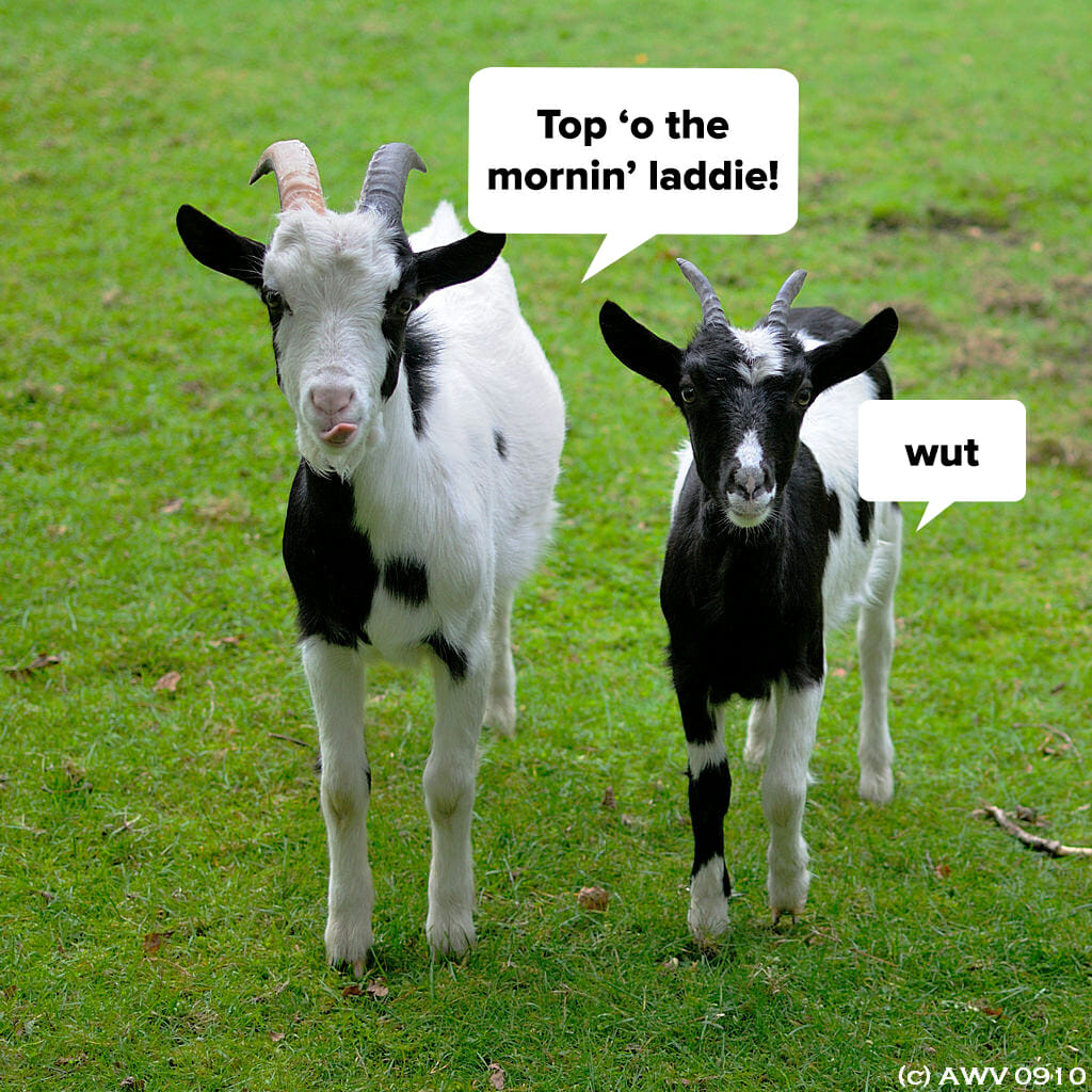 goats (with accents)