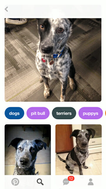 pinterest lens search for a doggo